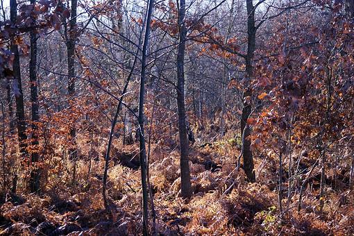Forêt de Fontainebleau 039