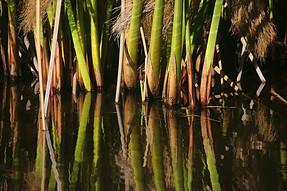 Jardins botaniques de Kirstenbosch 019