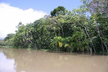 Amazonie péruvienne 029
