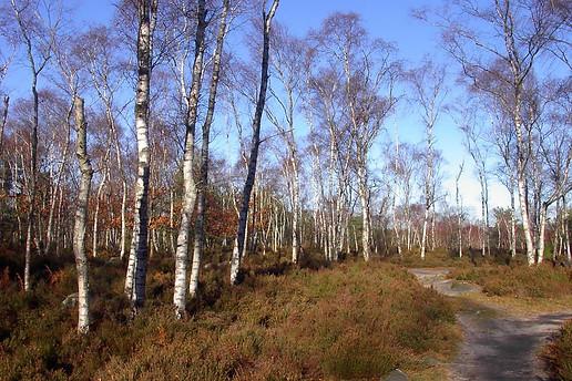 Forêt de Fontainebleau 005