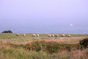 Wissant, Cap Blanc-Nez, Cap Gris-Nez 044