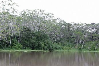 Amazonie péruvienne 015