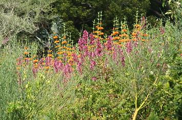 Jardins botaniques de Kirstenbosch 026