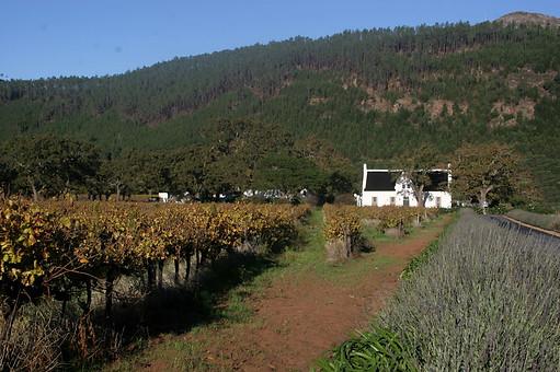 Route des Vignobles 009