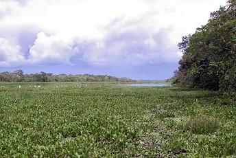 Amazonie péruvienne 028