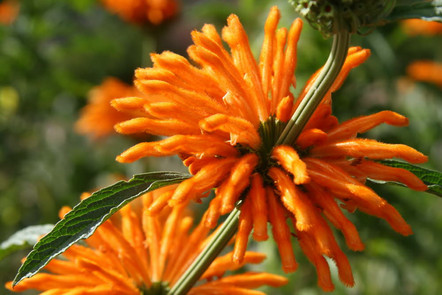 Jardins botaniques de Kirstenbosch 023