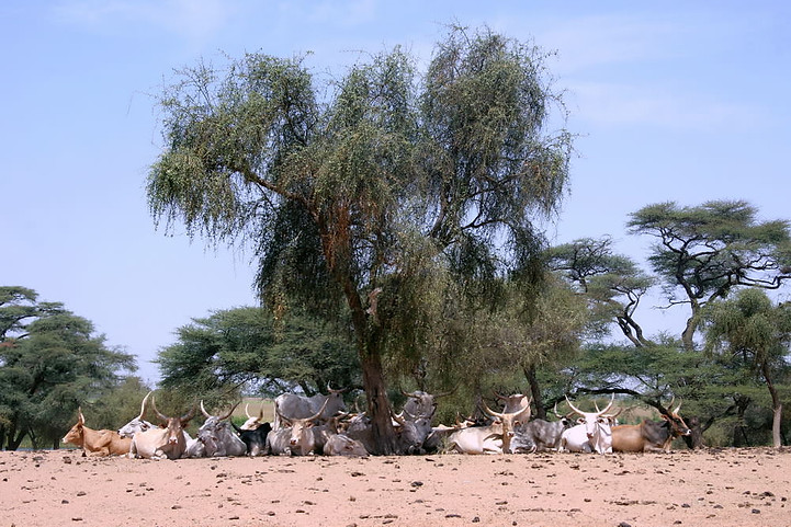 Vallée du fleuve Sénégal 042