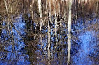 Forêt de Fontainebleau 025