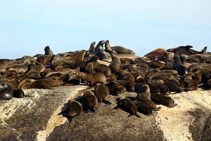 Presqu'île du Cap 006