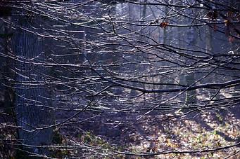 Forêt de Fontainebleau 018