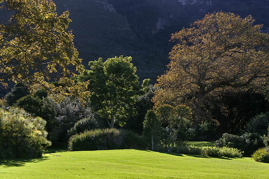 Jardins botaniques de Kirstenbosch 005