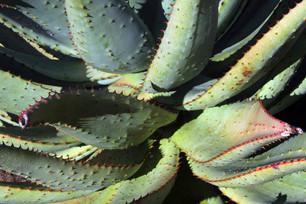 Jardins botaniques de Kirstenbosch 021