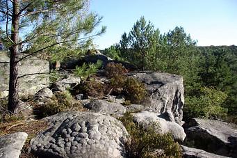 Forêt de Fontainebleau 019