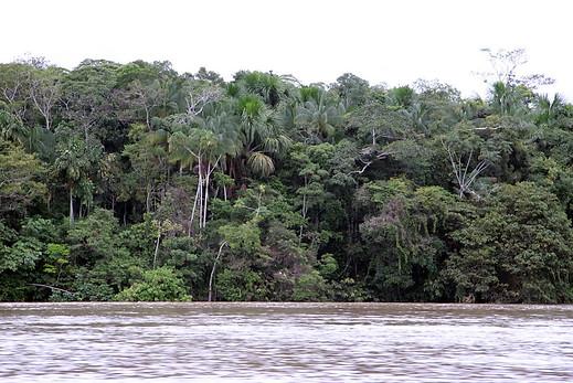 Amazonie péruvienne 005