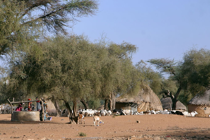 Vallée du fleuve Sénégal 018