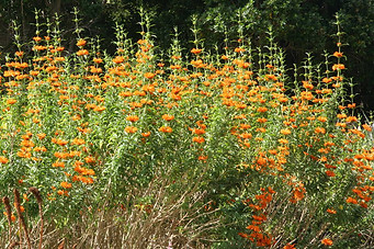 Jardins botaniques de Kirstenbosch 014
