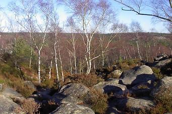 Forêt de Fontainebleau 002