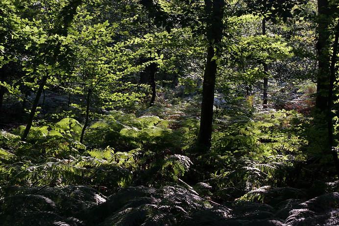 Forêt de Fontainebleau 030