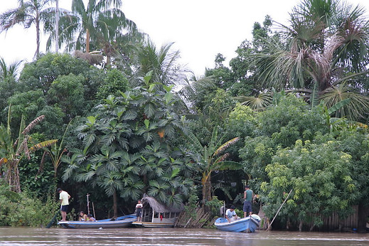 Amazonie péruvienne 004