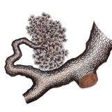 노송 2012-2 Old Pine Tree 2012-2 2012 87x113x8cm 동파이프 산소용접 copper welding