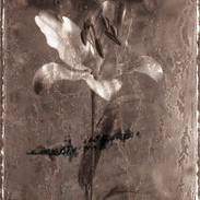 Lily 2017 100x79.46cm pigment print