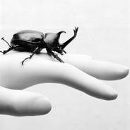 plastic syndrome3_Stag beetle 2018 50x41.6cm pigment print