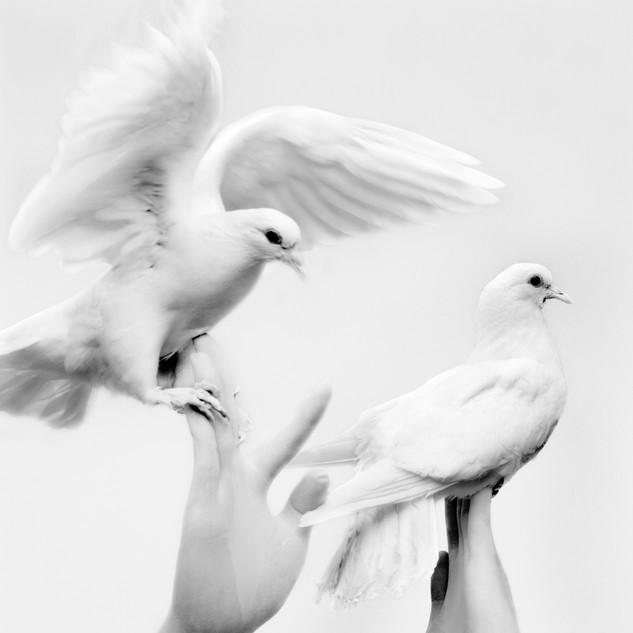 plastic syndrome1_Pigeon 2018 160x133.3cm pigment print