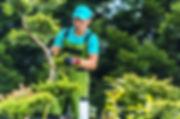 Arborist near me