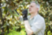 Orlando Tree Removal Cost