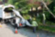 Apopka Tree Removal Service