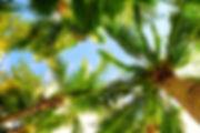 Orlando Palm Tree Service