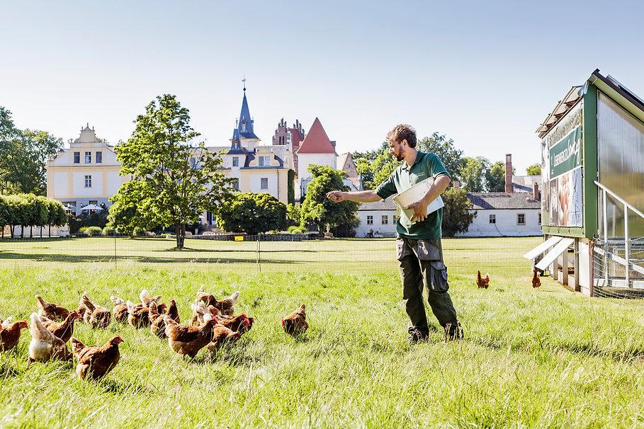 Hühner_Fütterung.jpg