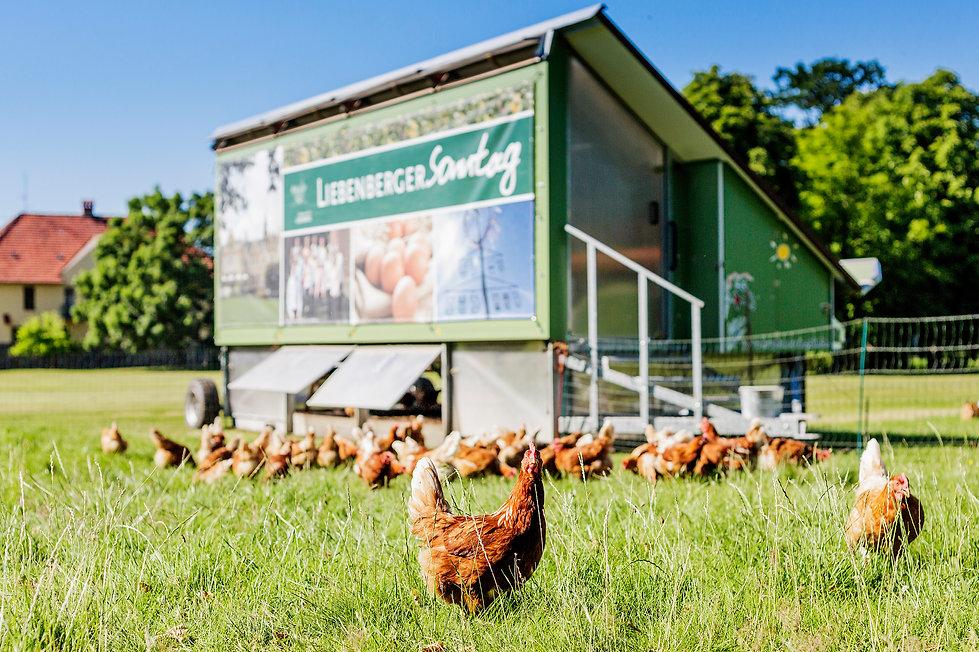 Hühner_Hühnermobil.jpg
