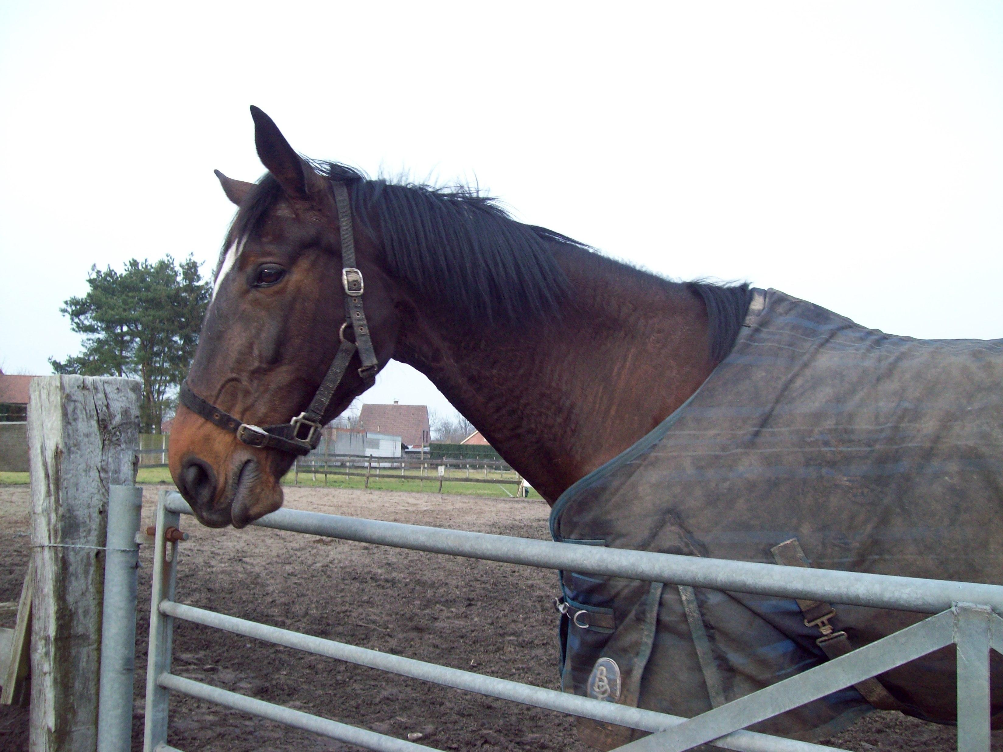 Energetische Osteopathie bij Paarden