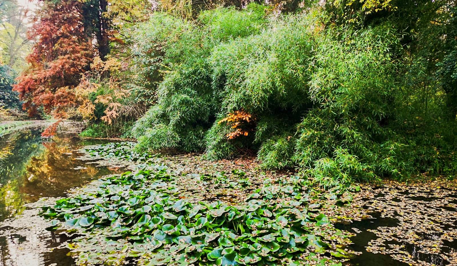 Wohnanlage Simeria - Park - 05.jpg