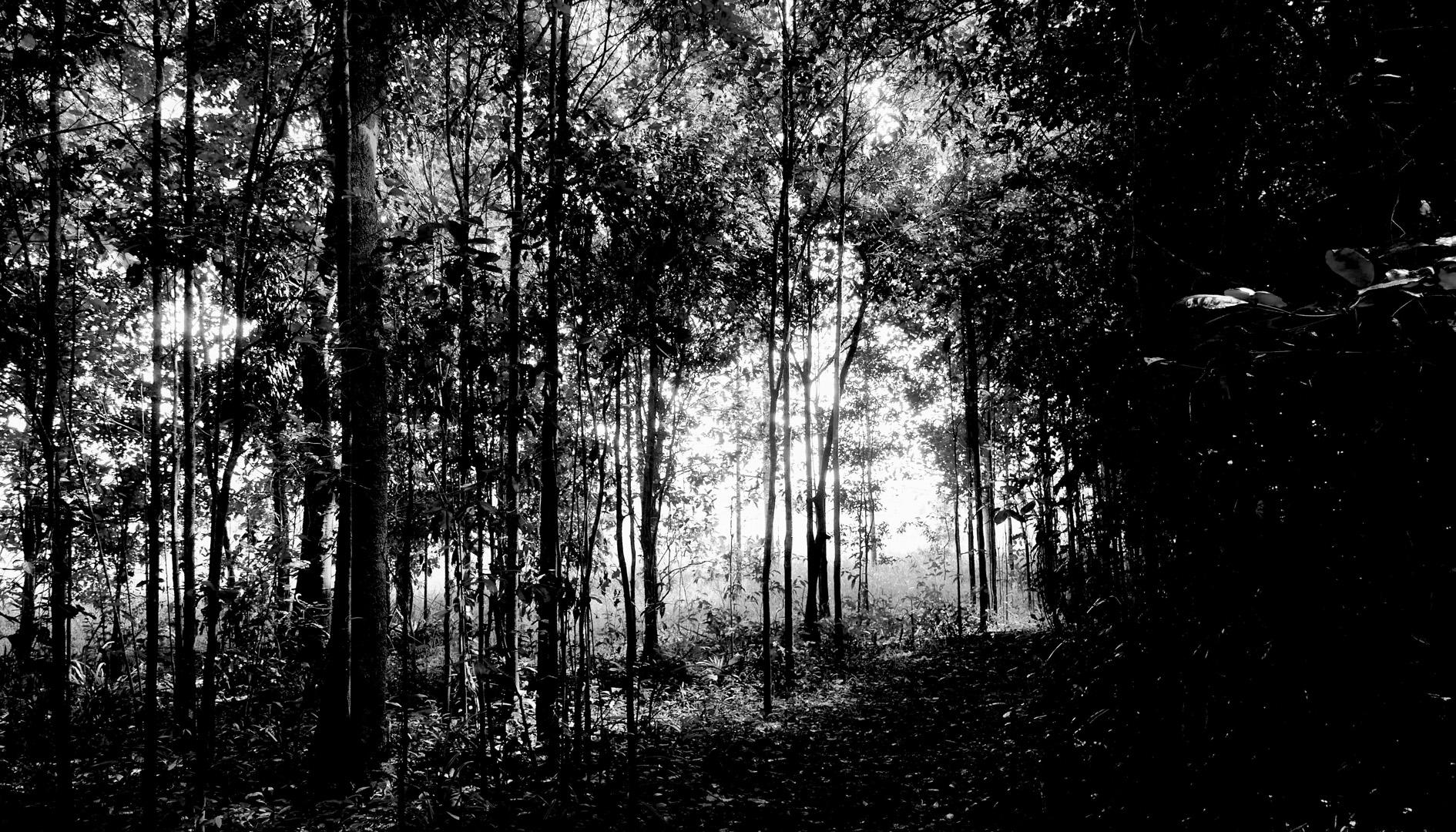 Sunlight fingers . Eubenangee Swamp Babinda Qld