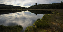 NZ Wetland