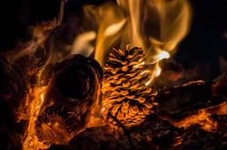 Pinecone Fire