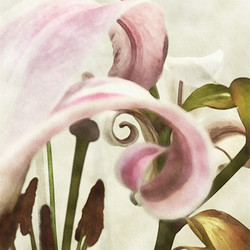 Painterly Lily