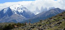 Patagonia Pastures