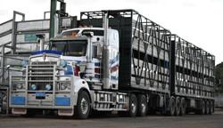 Cattle Trucks - Beau Ingram
