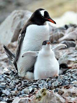 Look Mum ...Two Wings