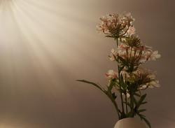 Flowers - Samantha Munt