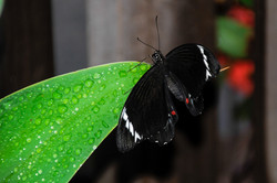 Butterfly Enjoying the Rain