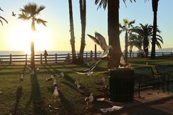 Seagulls are the Same Everywhere!