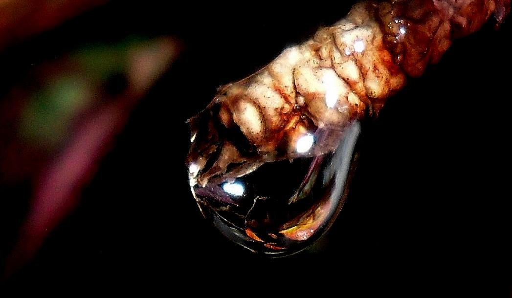 Nightly Drop