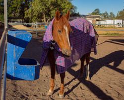 IMG_5562 Horse