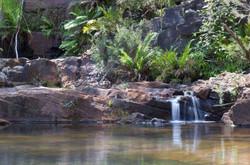 Ferns 'n Falls