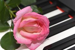 Pink Rose On Keys