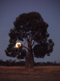 Wilf Bottle Tree